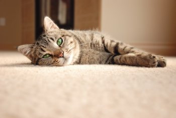 Reasons to Choose Carpet for Your Home