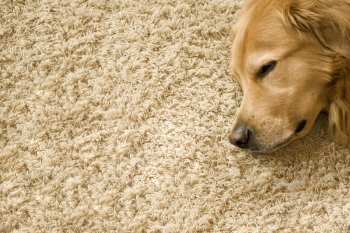 Tips for Choosing Right Type of Carpets